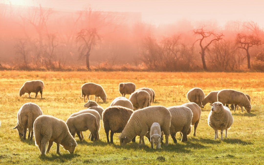 Тестирование пастушьего инстинкта